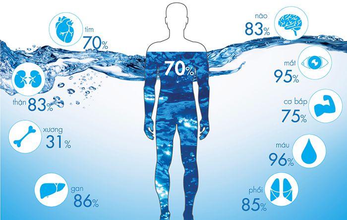 Phân bổ nước cho cơ thể